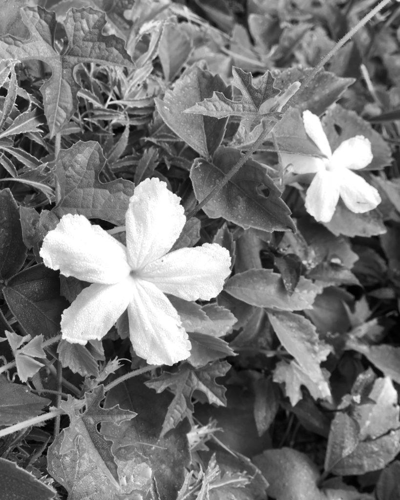 Màu hoa trắng
