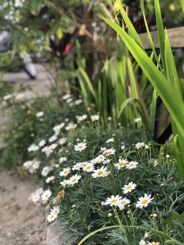 Đà Lạt ngàn hoa