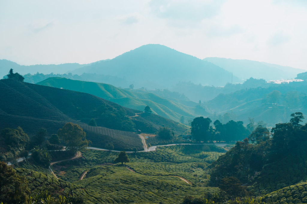 malaysia-cameron-highlands-travel-photo-20190317081904837-original-image