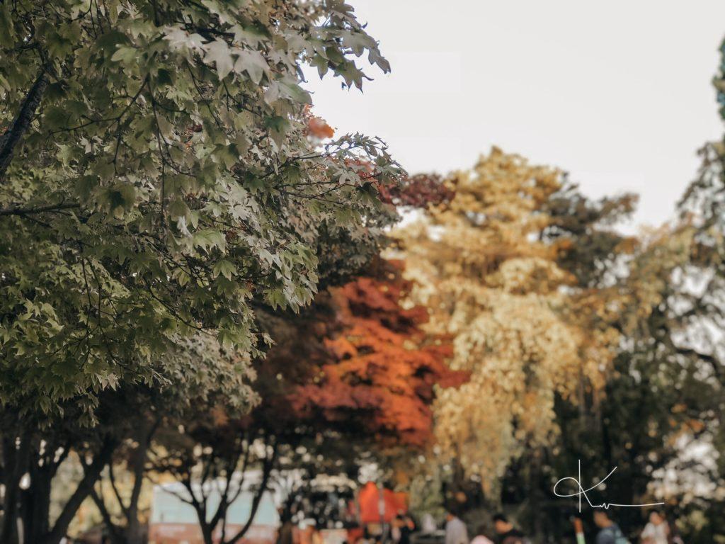 Mùa Thu Lá Vàng Hàn Quốc